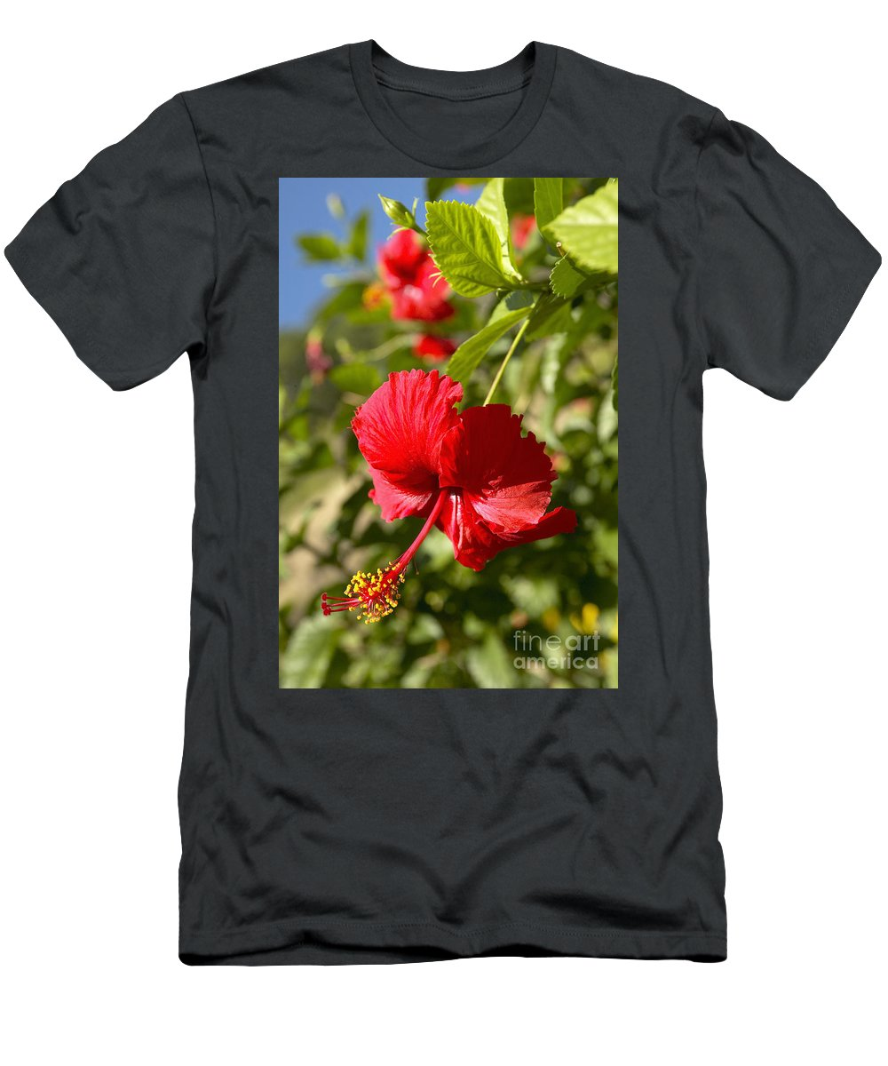 Above Men's T-Shirt (Athletic Fit) featuring the photograph Red Hibiscus by Kyle Rothenborg - Printscapes