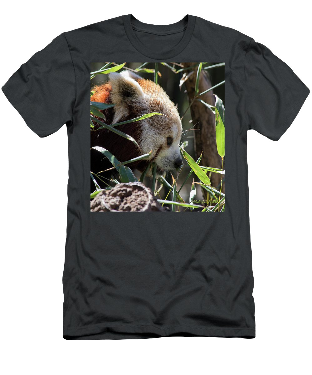 Panda T-Shirt featuring the photograph Red Panda by ChelleAnne Paradis