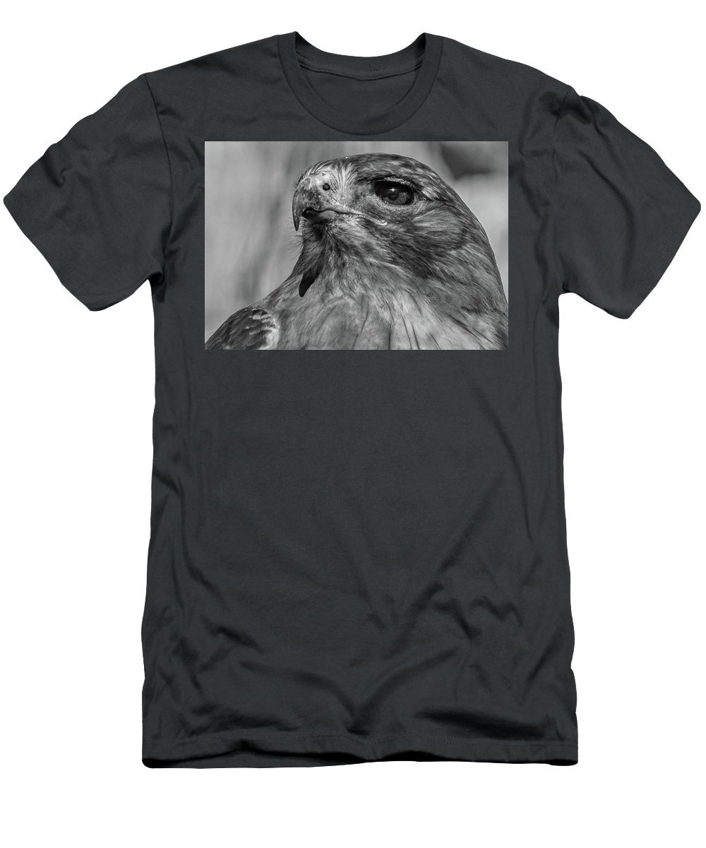 Red-tailed Hawk Men's T-Shirt (Athletic Fit) featuring the photograph Red-tailed Hawk 2 by David Pine