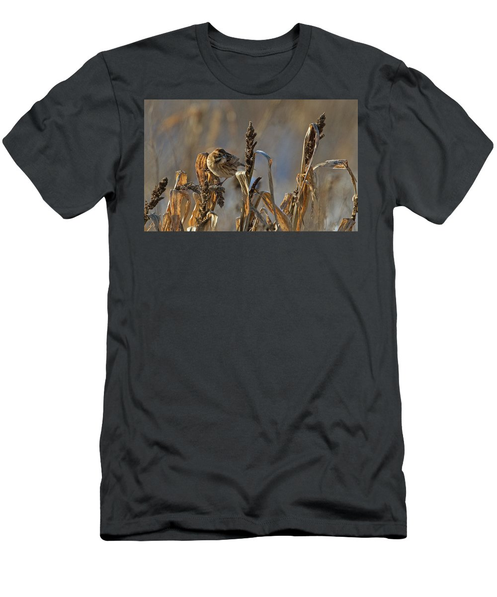 Reed Bunting Men's T-Shirt (Athletic Fit) featuring the photograph Reed Bunting by Bob Kemp