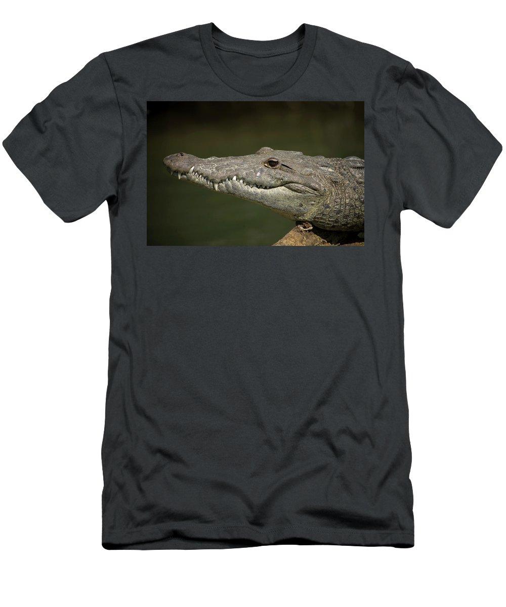 Chiapas Men's T-Shirt (Athletic Fit) featuring the photograph Reptile by Chico Sanchez