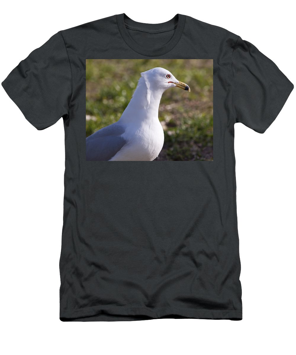 Larus Men's T-Shirt (Athletic Fit) featuring the photograph Ring-billed Gull by Allan Hughes