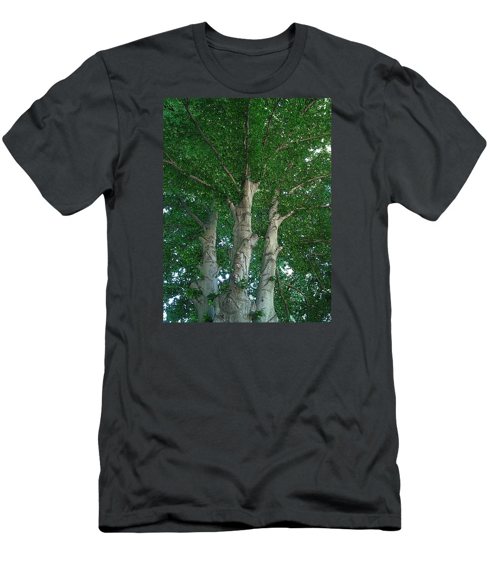 Trees Men's T-Shirt (Athletic Fit) featuring the photograph River Birches by Mykel Davis
