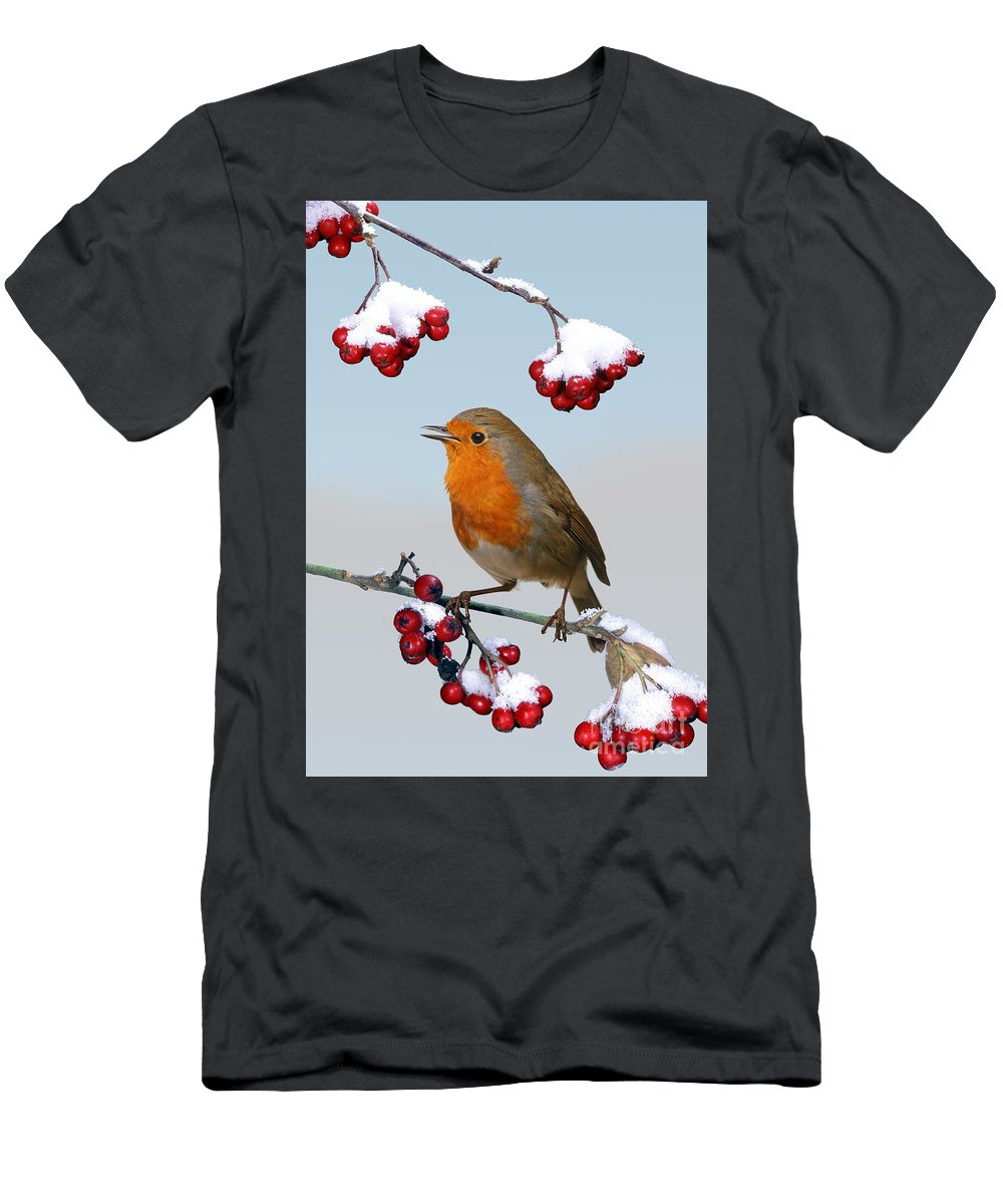 European Robin Men's T-Shirt (Athletic Fit) featuring the photograph Robin On Winter Cotoneaster by Warren Photographic