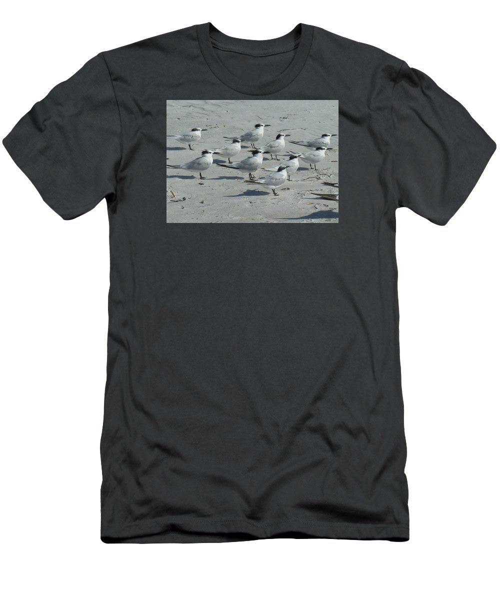 Royal Terns Men's T-Shirt (Athletic Fit) featuring the photograph Royal Terns #3 by Bonita Barlow