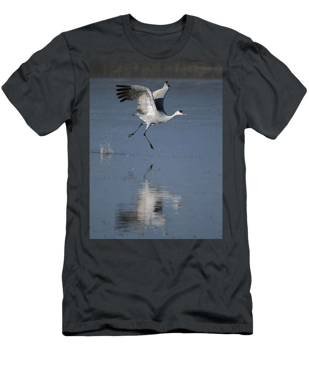 Sandhill Crane Men's T-Shirt (Athletic Fit) featuring the photograph Sandhill Crane Running On Water by Gary Langley
