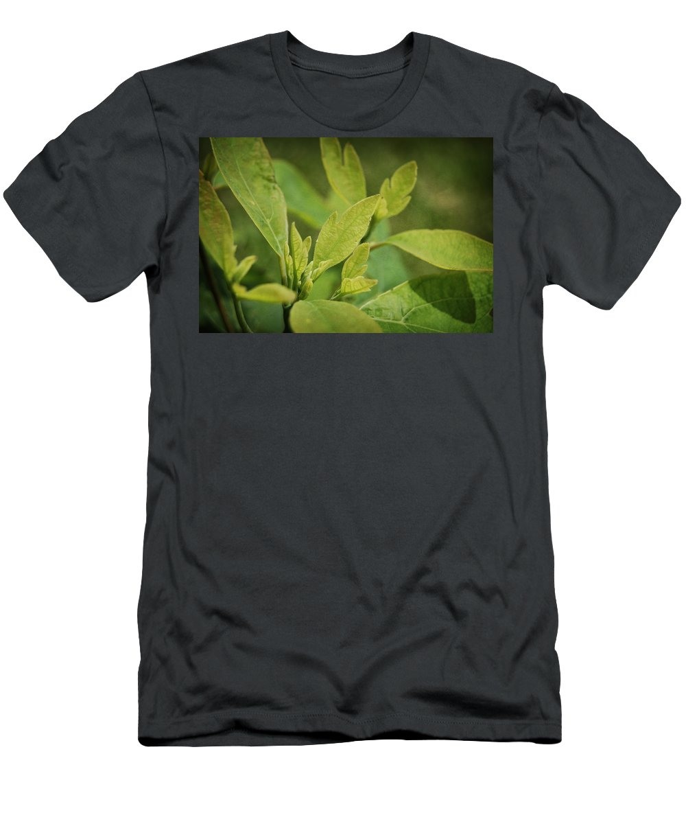 Sassafrass Men's T-Shirt (Athletic Fit) featuring the photograph Sassafras Tree by Amber Flowers