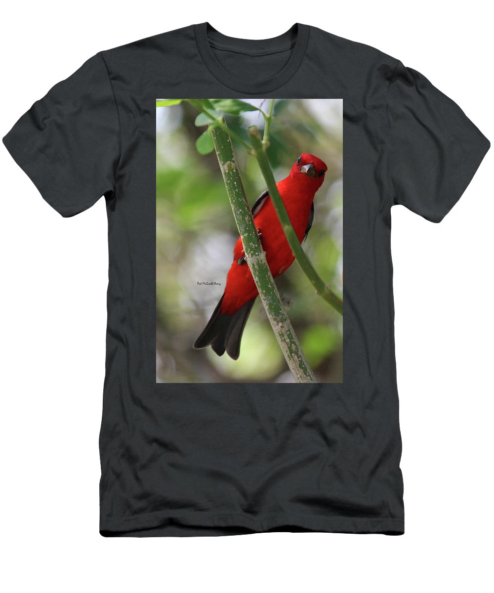 Birds T-Shirt featuring the photograph Scarlet Tanager by Pat McGrath Avery