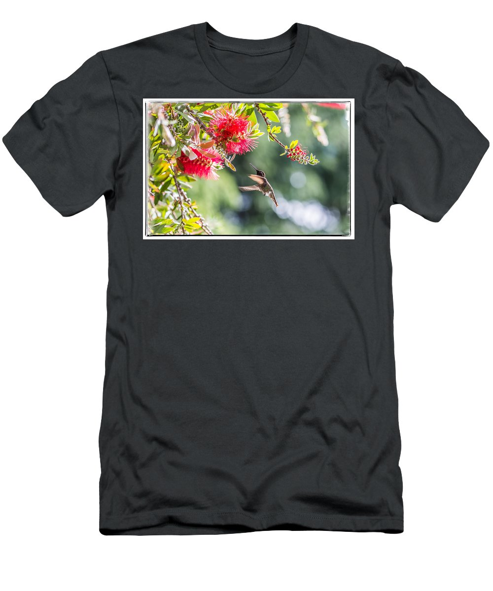 Anna's Hummingbird Searching For Nectar Men's T-Shirt (Athletic Fit) featuring the photograph Searching For Nectar by Jon Ma