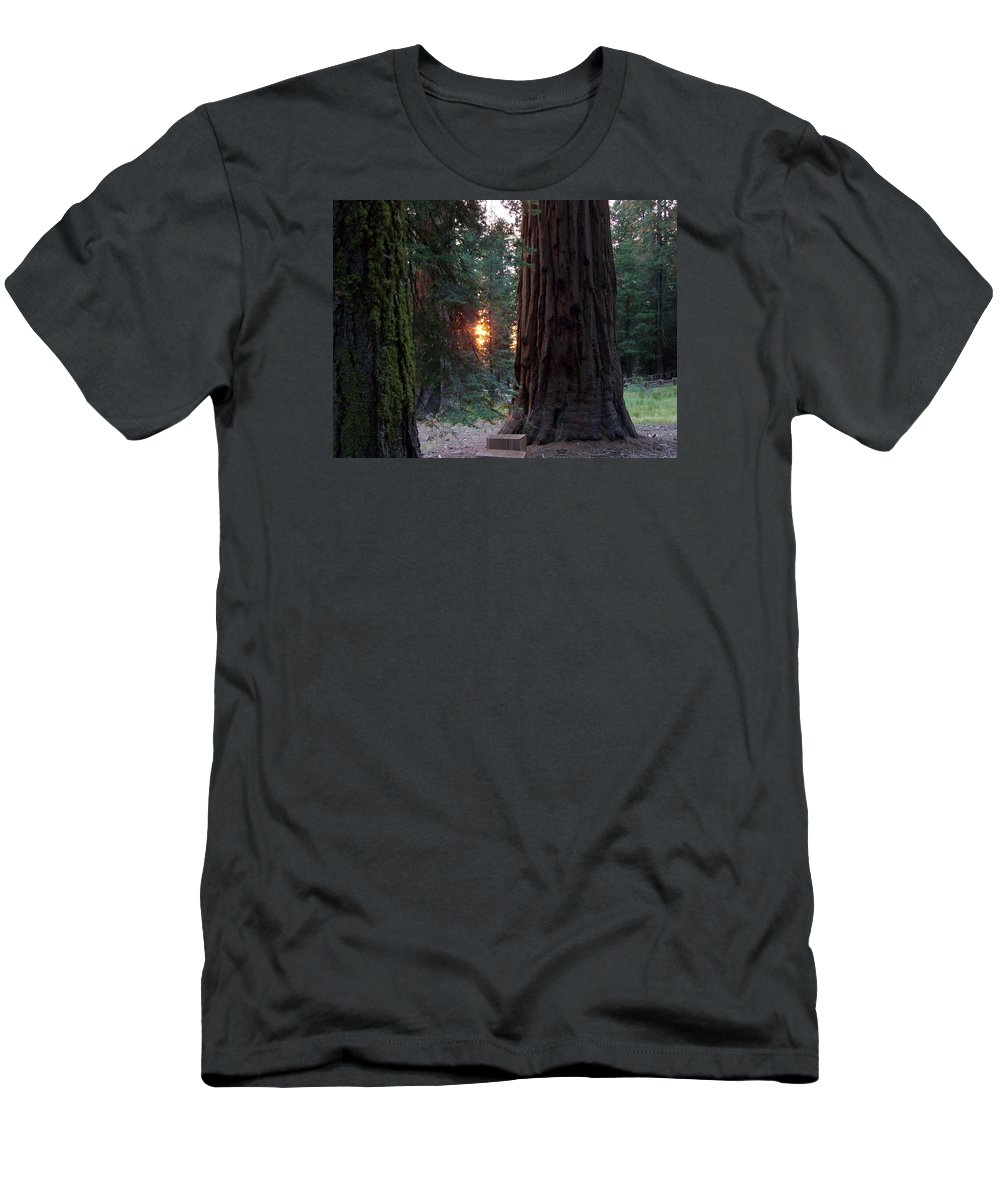 Trees Men's T-Shirt (Athletic Fit) featuring the photograph Sequoia Sunset by Anita Troy
