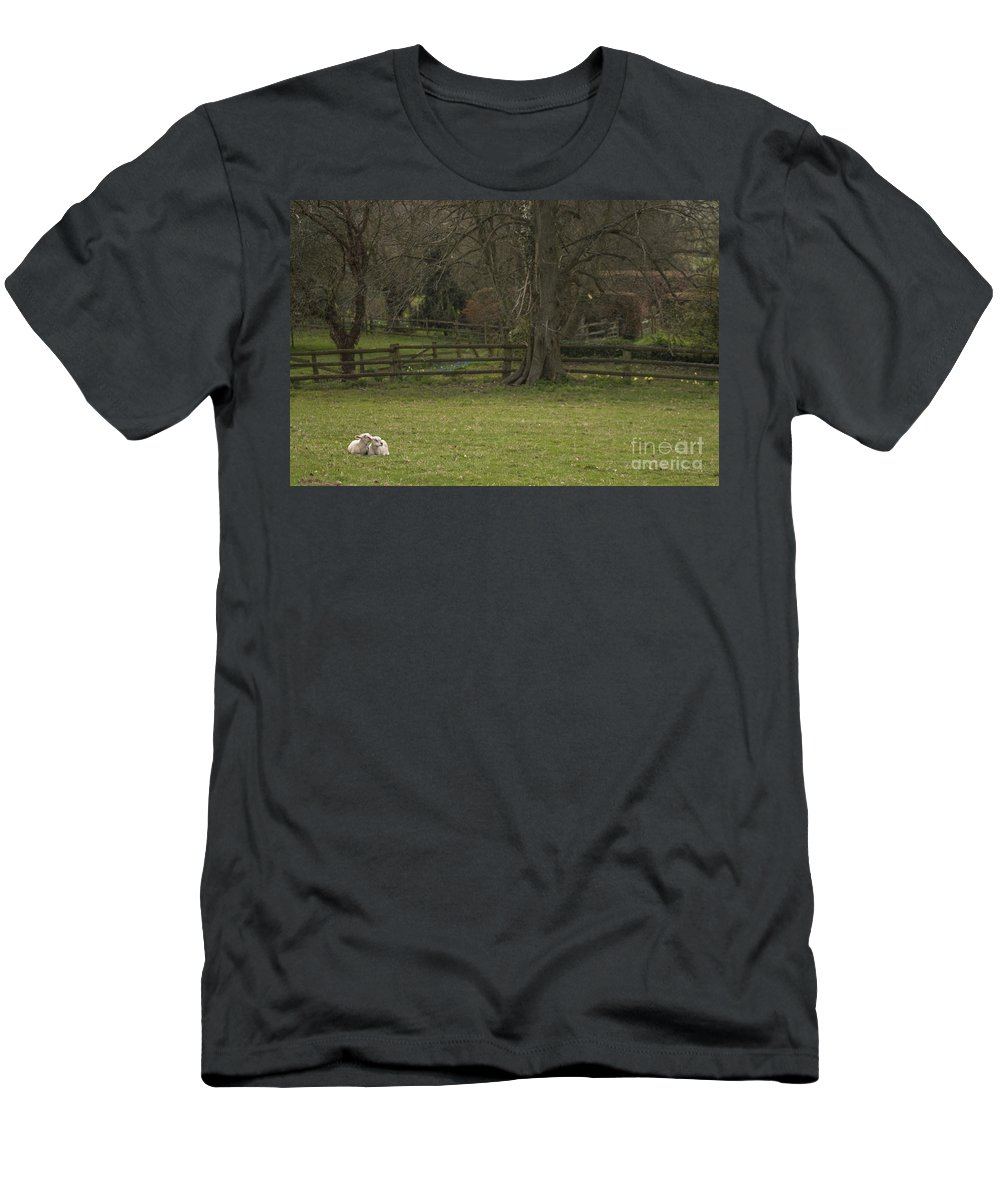 Sheep Men's T-Shirt (Athletic Fit) featuring the photograph Silent Afternoon by Angel Ciesniarska