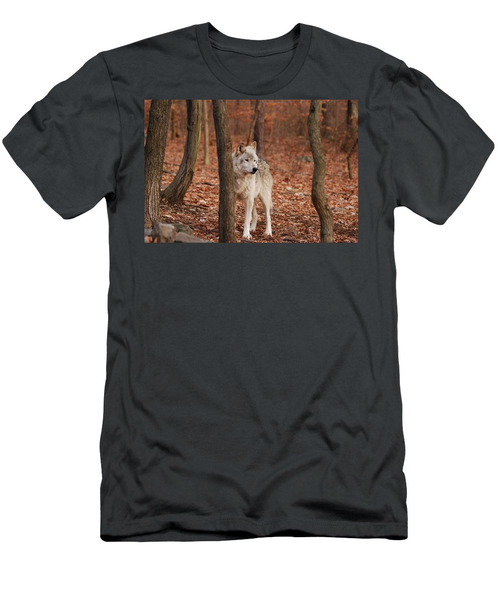Wolf Men's T-Shirt (Athletic Fit) featuring the photograph Silent One by Lori Tambakis