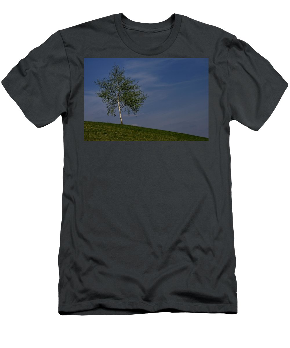 Betula Men's T-Shirt (Athletic Fit) featuring the photograph Silver Birch Tree by TouTouke A Y
