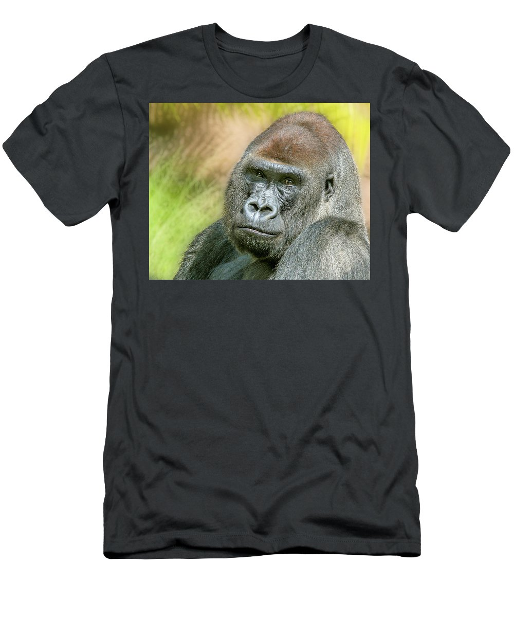 Silverback Gorilla Men's T-Shirt (Athletic Fit) featuring the photograph Silverback by Hugh Mobley