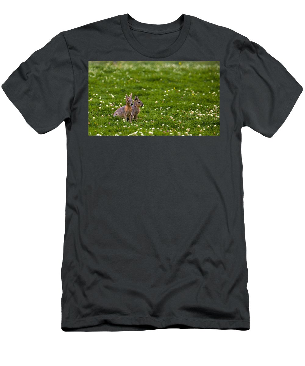 Animal Men's T-Shirt (Athletic Fit) featuring the photograph Sitting In Clover by Chris Lord