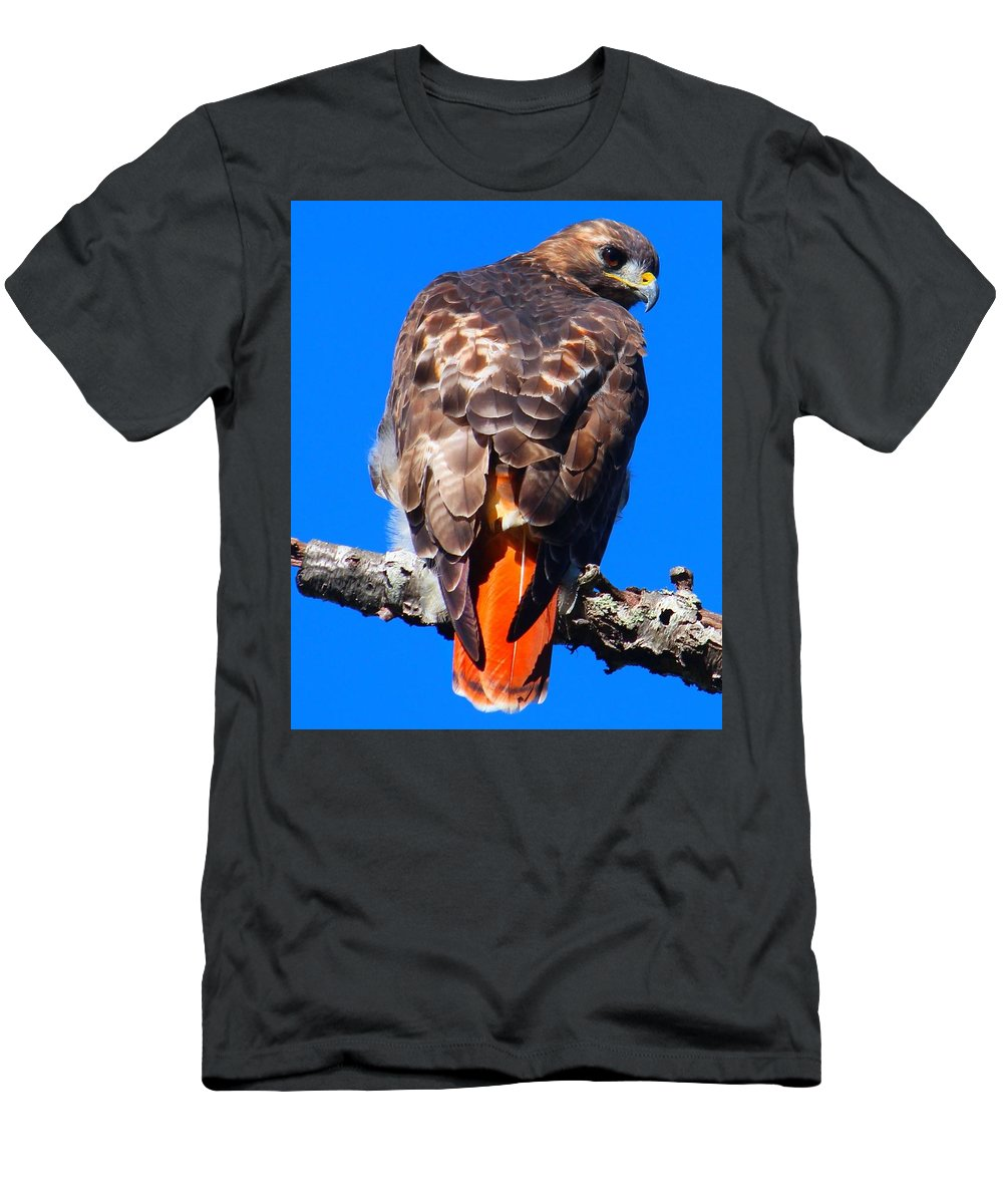 Redtail Men's T-Shirt (Athletic Fit) featuring the photograph Sitting by James Caine