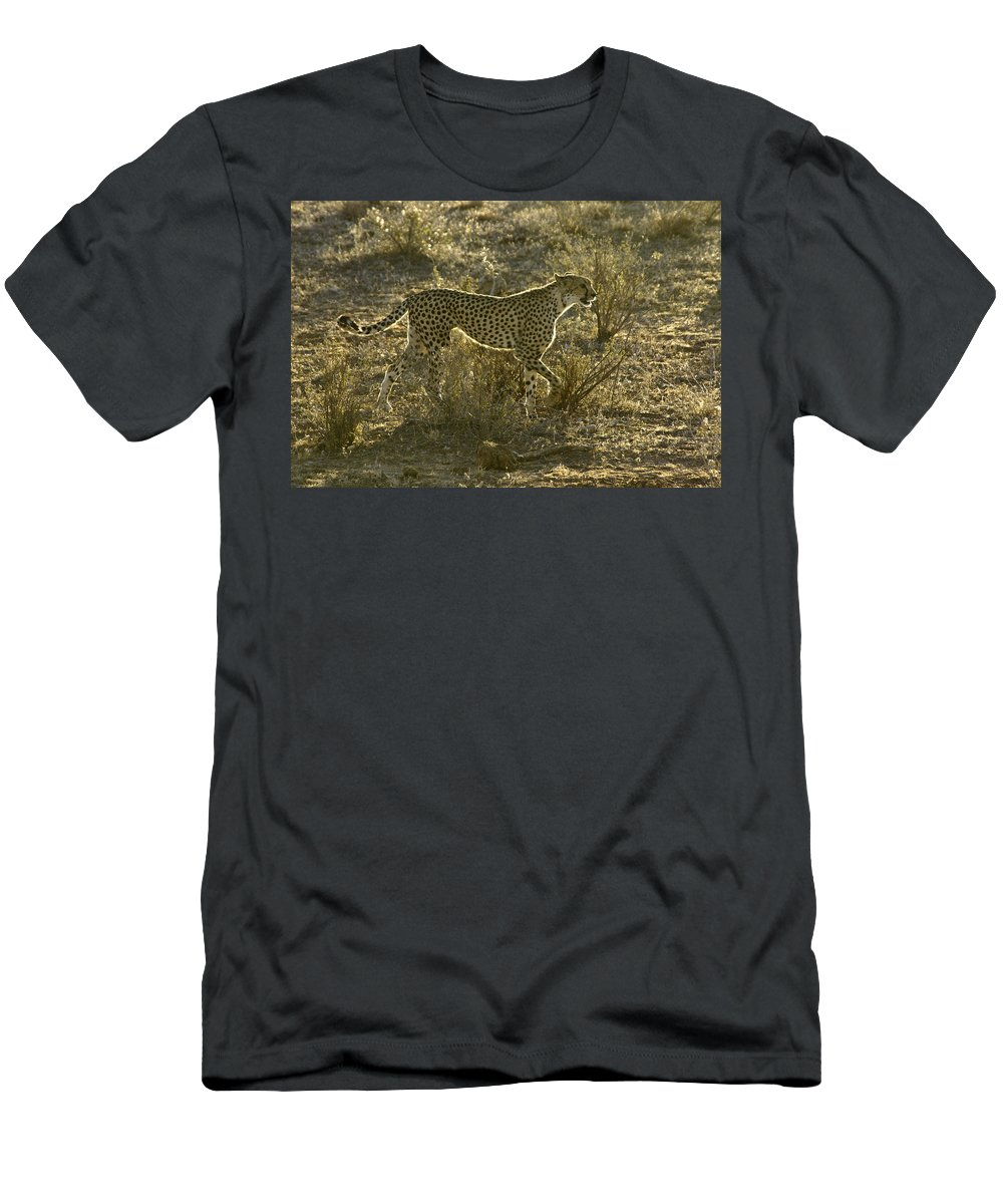 Africa Men's T-Shirt (Athletic Fit) featuring the photograph Sleek And Spotted by Michele Burgess