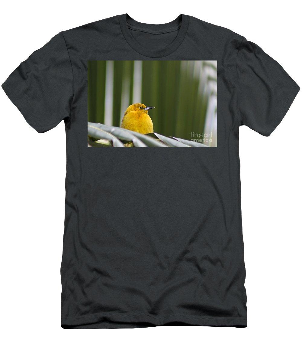 Bird Men's T-Shirt (Athletic Fit) featuring the photograph Sleep Little One by Teresa Zieba