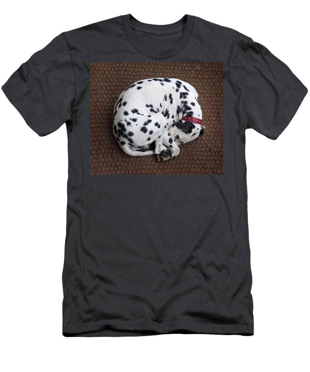 Dog Men's T-Shirt (Athletic Fit) featuring the photograph Sleeping Dalmatian II by Rafa Rivas
