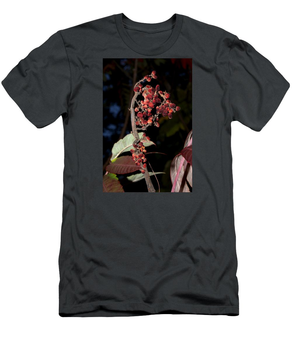 Nature Men's T-Shirt (Athletic Fit) featuring the photograph Smooth Sumac Flower by Robert Morin
