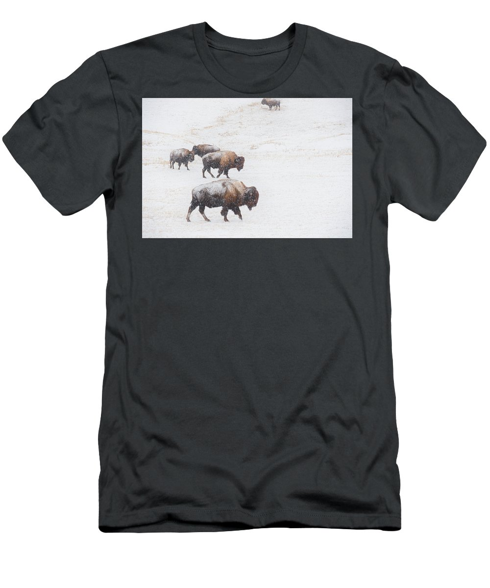 Buffalo Men's T-Shirt (Athletic Fit) featuring the photograph Snow Bound by Derald Gross