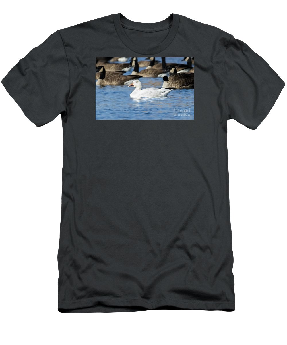 Canon Men's T-Shirt (Athletic Fit) featuring the photograph Snow Goose by Ricky L Jones