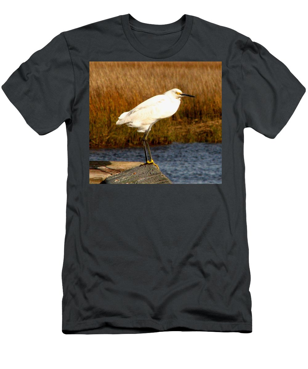Bird Egret snowy Egret white Egret Seabird Animals Nature Wildlife Men's T-Shirt (Athletic Fit) featuring the photograph Snowy Egret 1 by J M Farris Photography