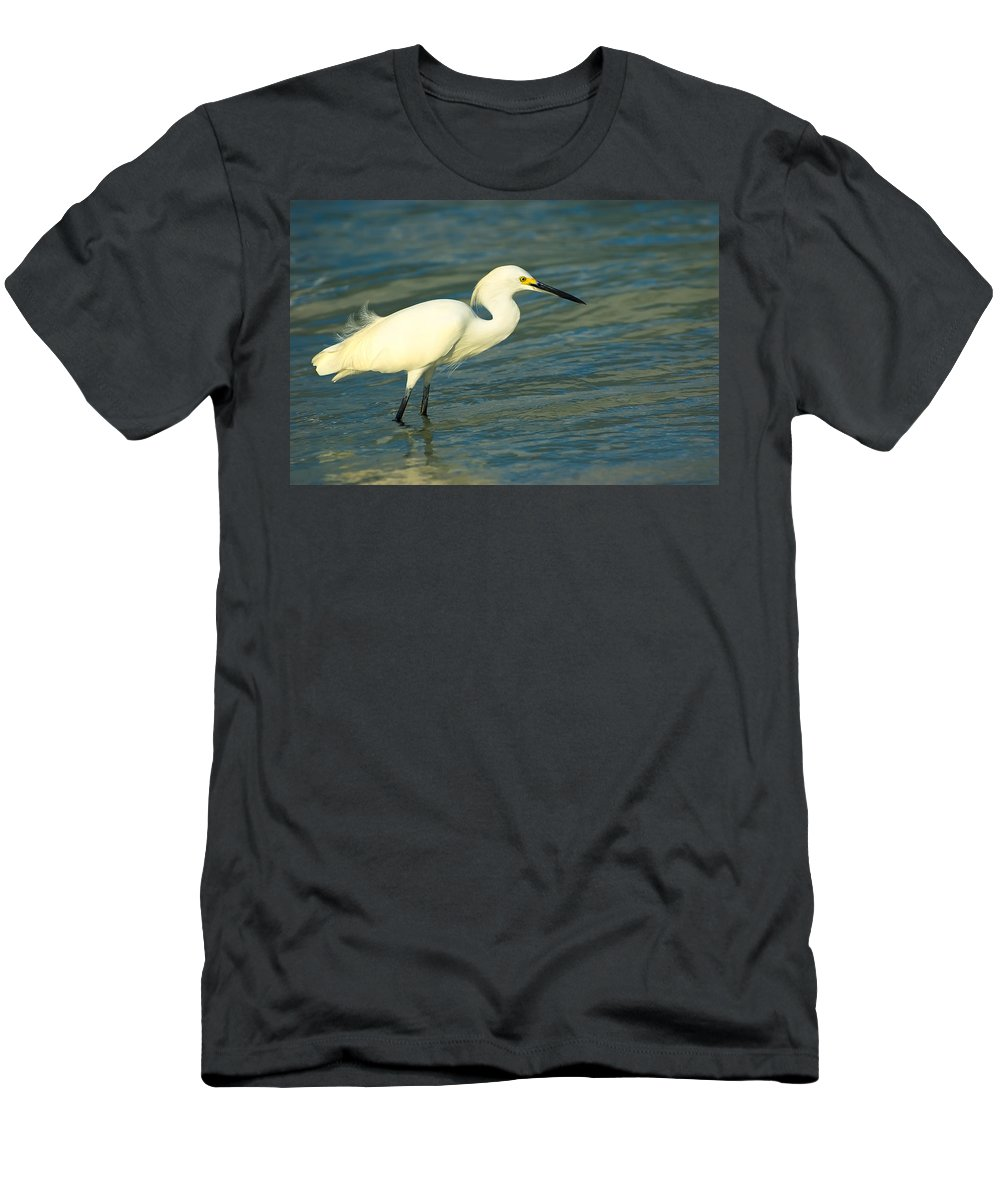 Animal Men's T-Shirt (Athletic Fit) featuring the photograph Snowy Egret by Rich Leighton