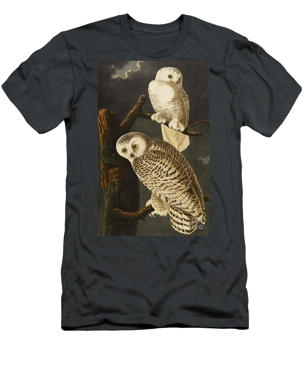 Snowy Owl (nyctea Scandiaca) Plate Cxxi From 'the Birds Of America' (aquatint & Engraving With Hand-colouring) By John James Audubon (1785-1851) Men's T-Shirt (Athletic Fit) featuring the drawing Snowy Owl by John James Audubon