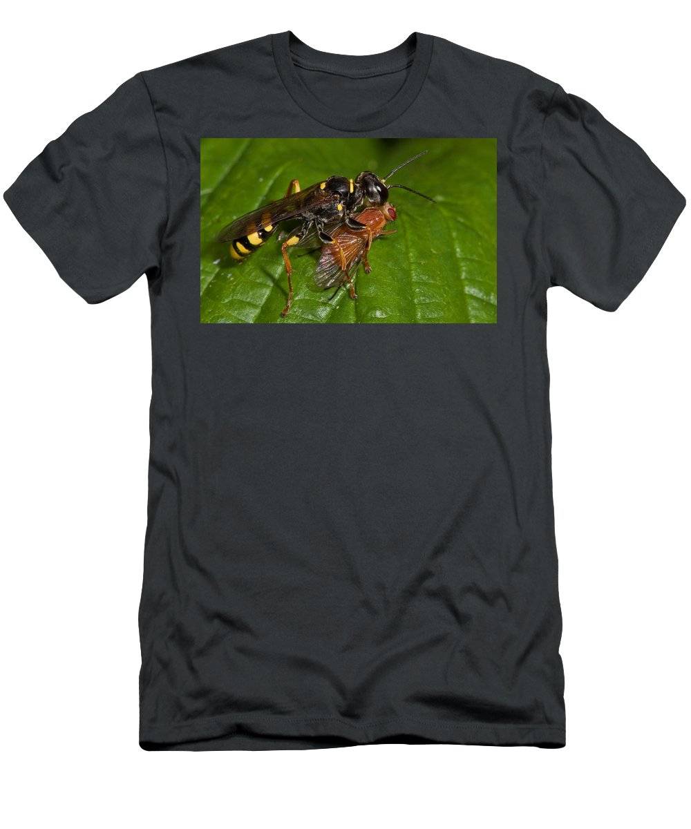 Solitary Wasp T-Shirt featuring the photograph Solitary Wasp by Bob Kemp