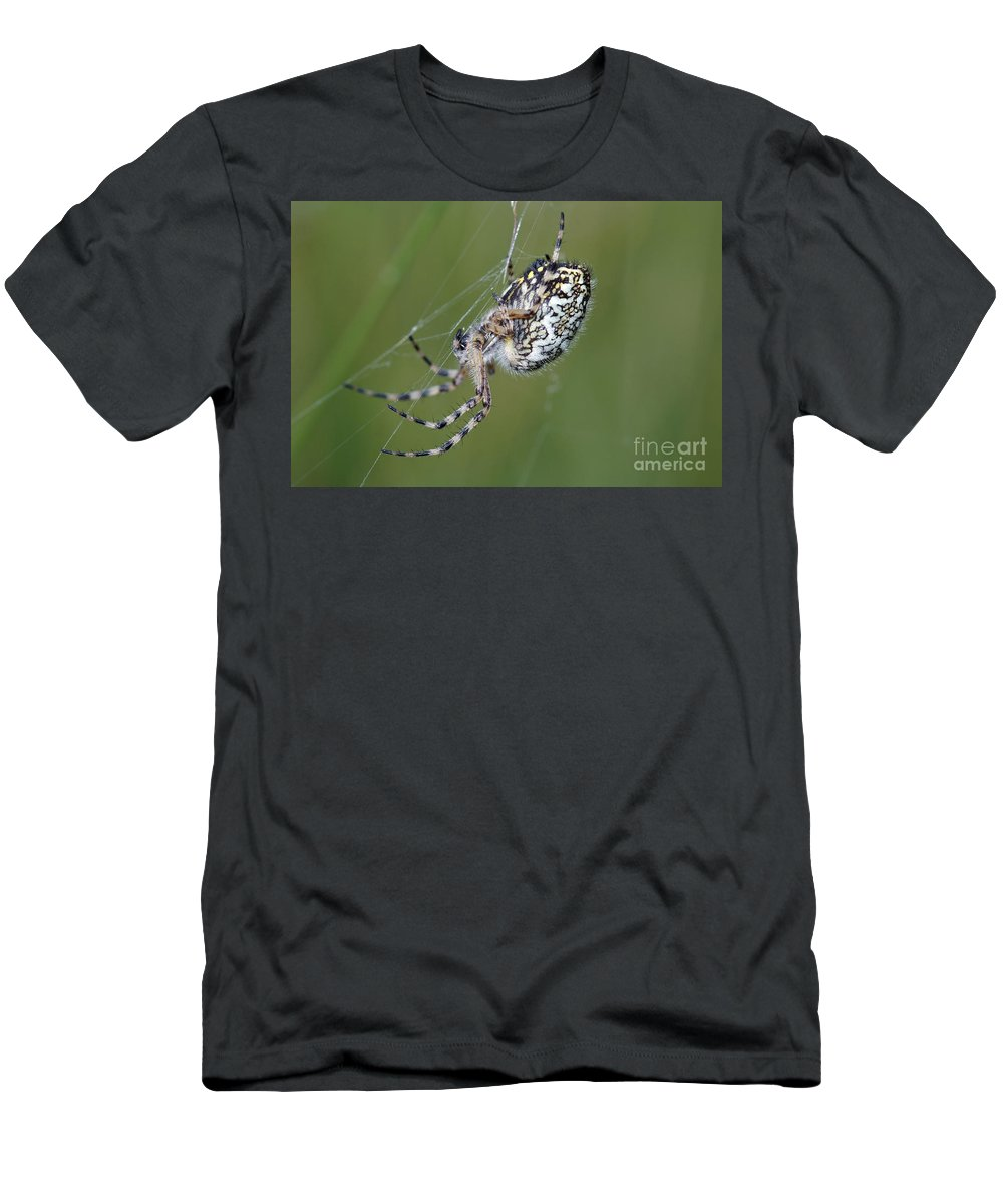 Insect Men's T-Shirt (Athletic Fit) featuring the photograph Spider by Michal Boubin