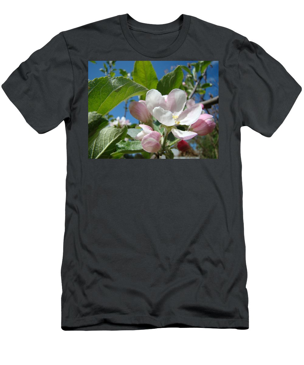 Apple Men's T-Shirt (Athletic Fit) featuring the photograph Spring Apple Blossoms Pink White Apple Trees Baslee Troutman by Baslee Troutman