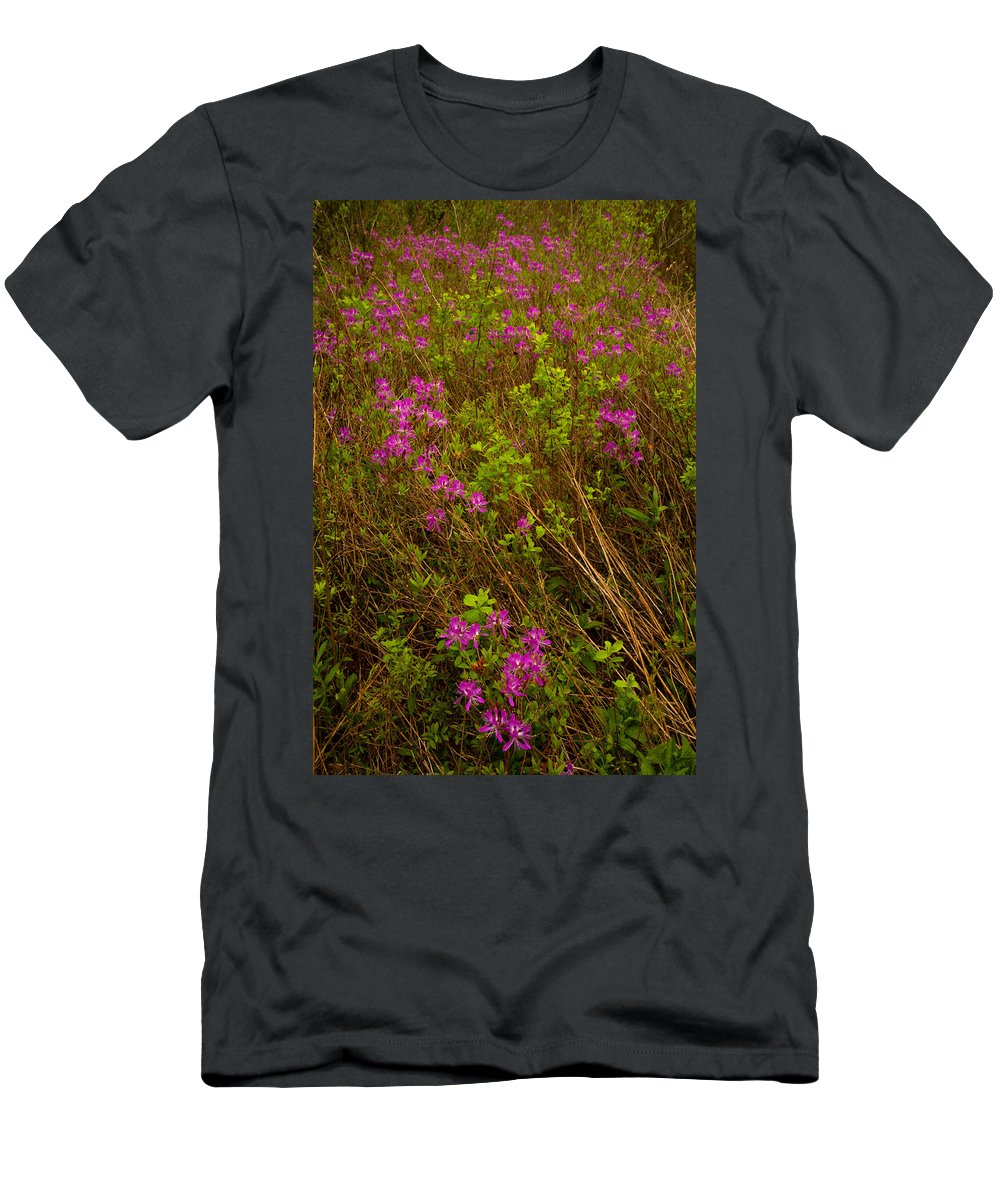 Wildflowers Men's T-Shirt (Athletic Fit) featuring the photograph Spring Rhodora Blossoms by Irwin Barrett