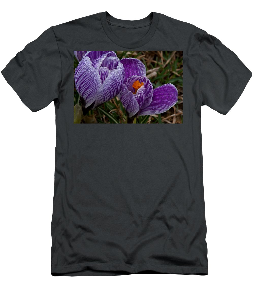 Domesticated Flowers Men's T-Shirt (Athletic Fit) featuring the photograph Spring Showered Crocuses by Irwin Barrett