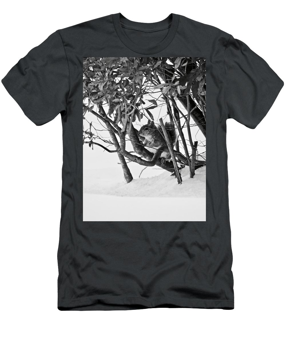 Squirrel Men's T-Shirt (Athletic Fit) featuring the photograph Squirrel In Low Branches by Rachel Morrison