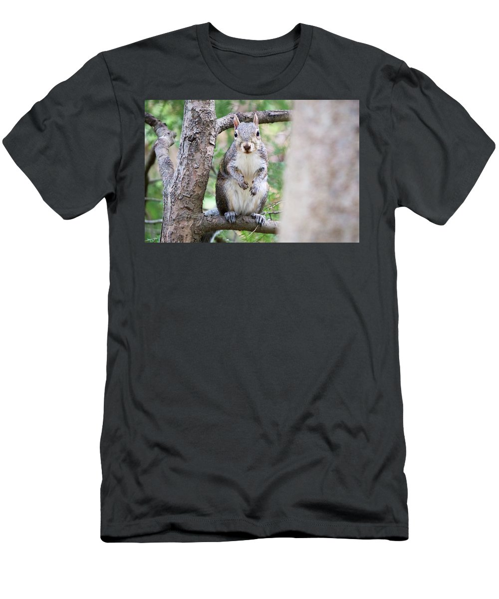 Squirrel Men's T-Shirt (Athletic Fit) featuring the photograph Squirrel Looking At Photographer And Waiting To Be Fed by Alex Grichenko