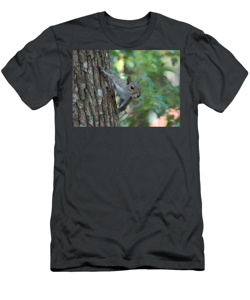 Squirrel Men's T-Shirt (Athletic Fit) featuring the photograph Squirrel by Robert Meanor