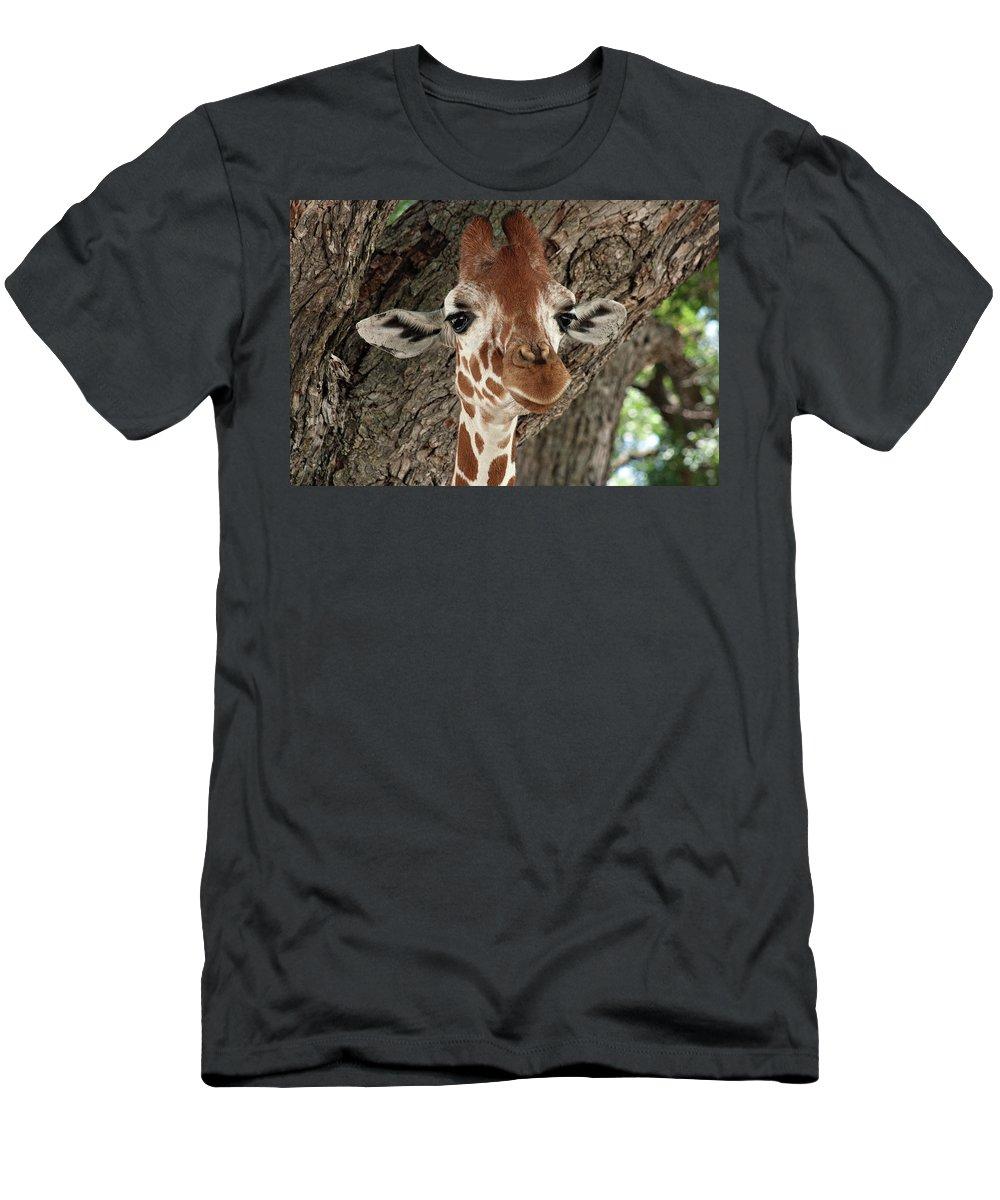 Giraffe Men's T-Shirt (Athletic Fit) featuring the photograph Standing Tall by Douglas Barnard