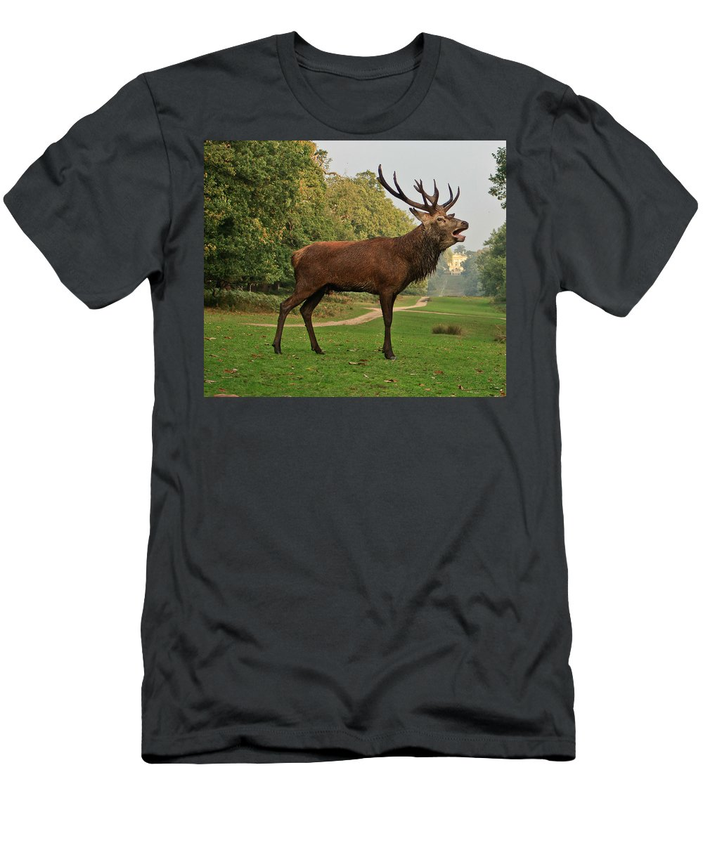 Deer Men's T-Shirt (Athletic Fit) featuring the photograph Stately Stag by Dawn OConnor