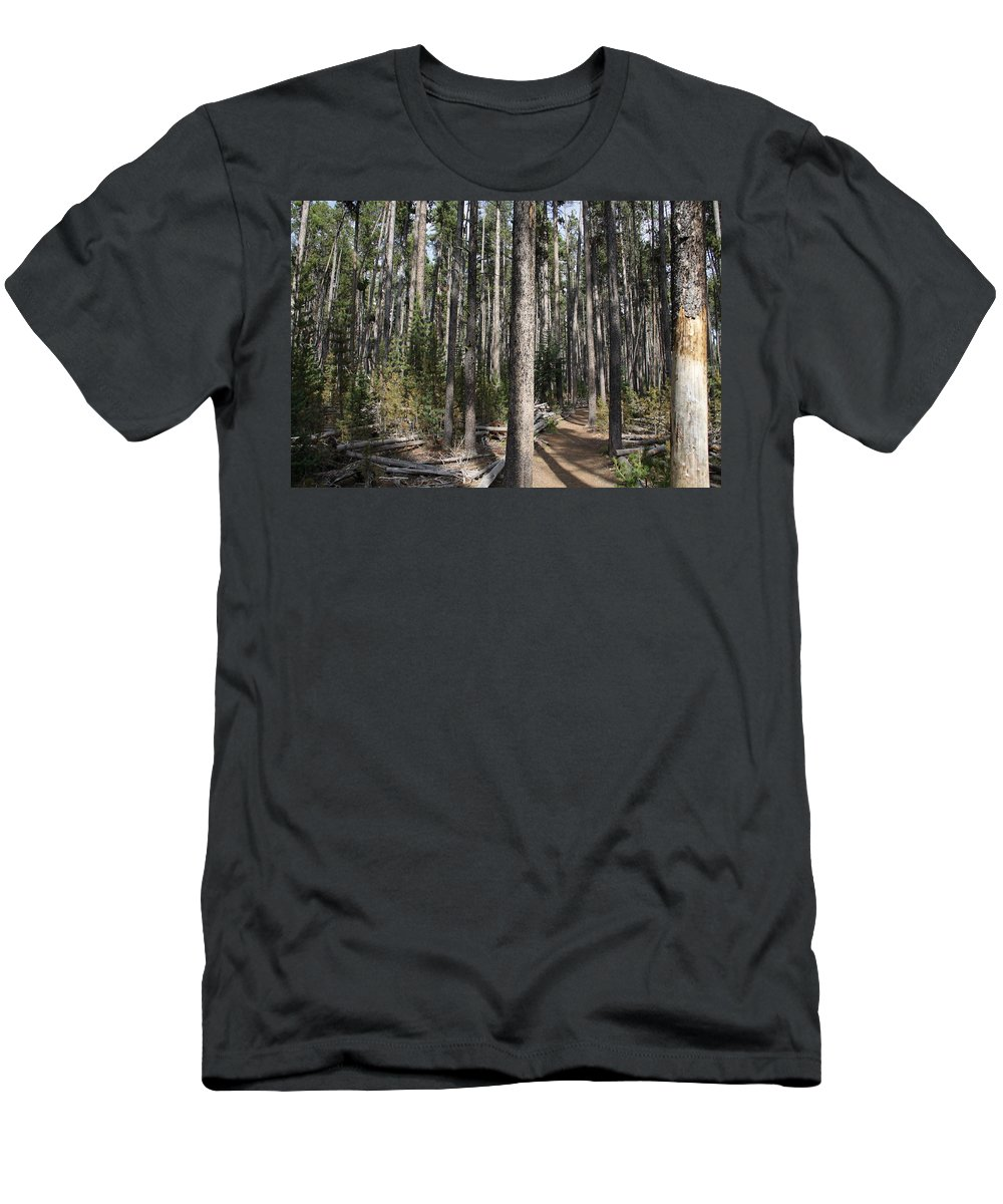 Yellowstone National Park; Storm Point Trail; Forest; Shadows; Pines Men's T-Shirt (Athletic Fit) featuring the photograph Storm Point Trail Forest by Steve Aserkoff