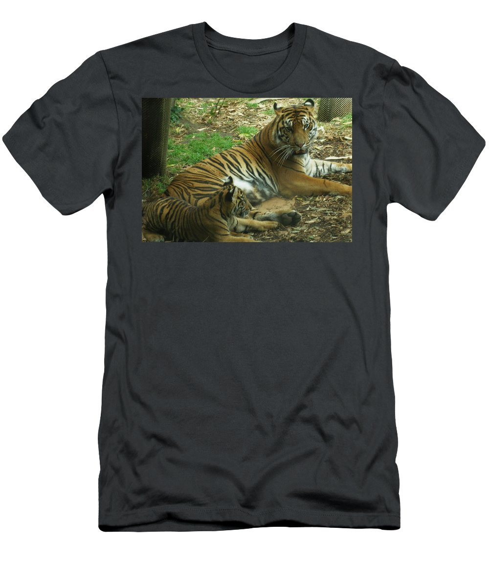 Tiger Men's T-Shirt (Athletic Fit) featuring the photograph Sumatran Tigers by Travis Day