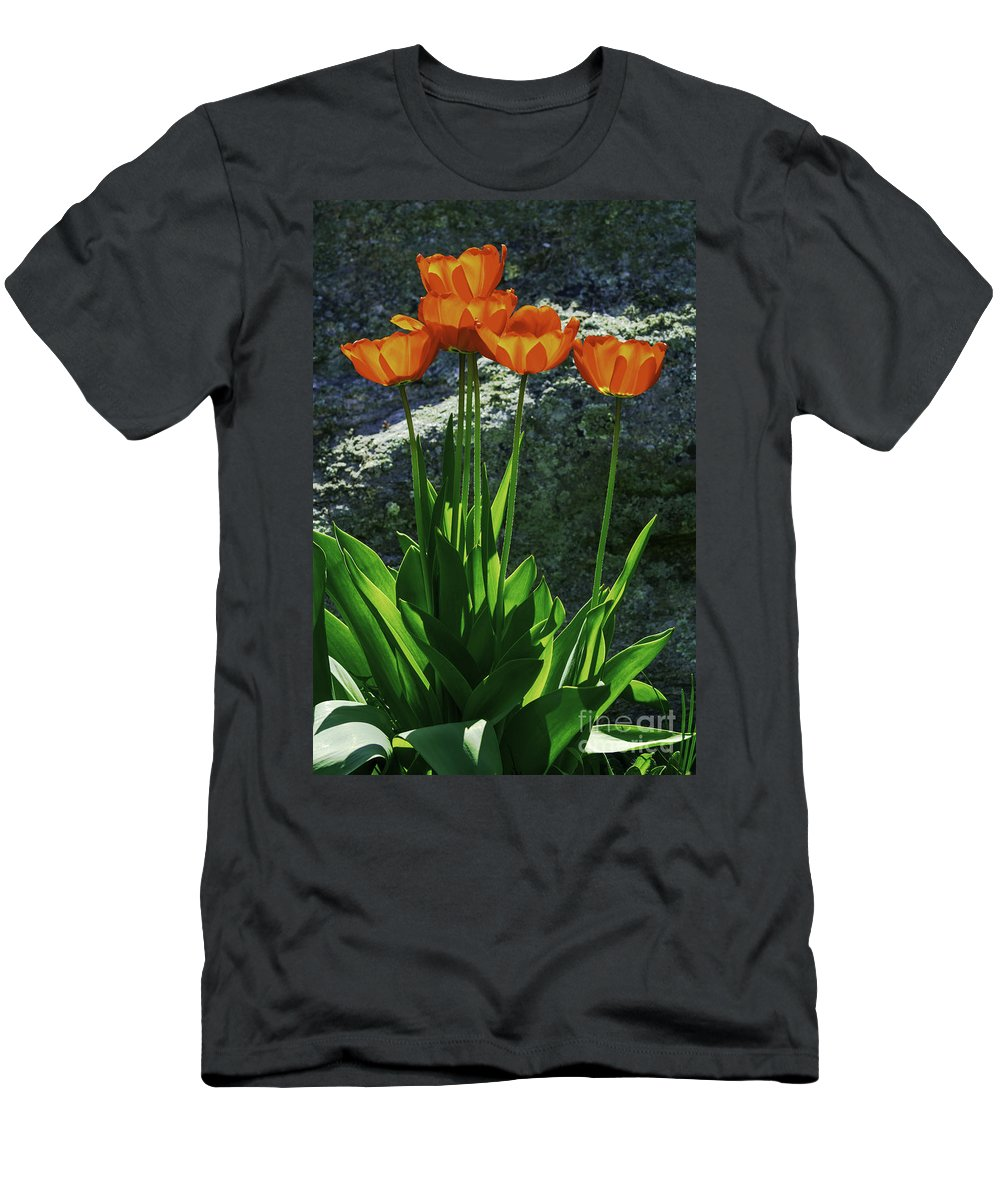 Tulip Men's T-Shirt (Athletic Fit) featuring the photograph Sun-filled by Joe Geraci