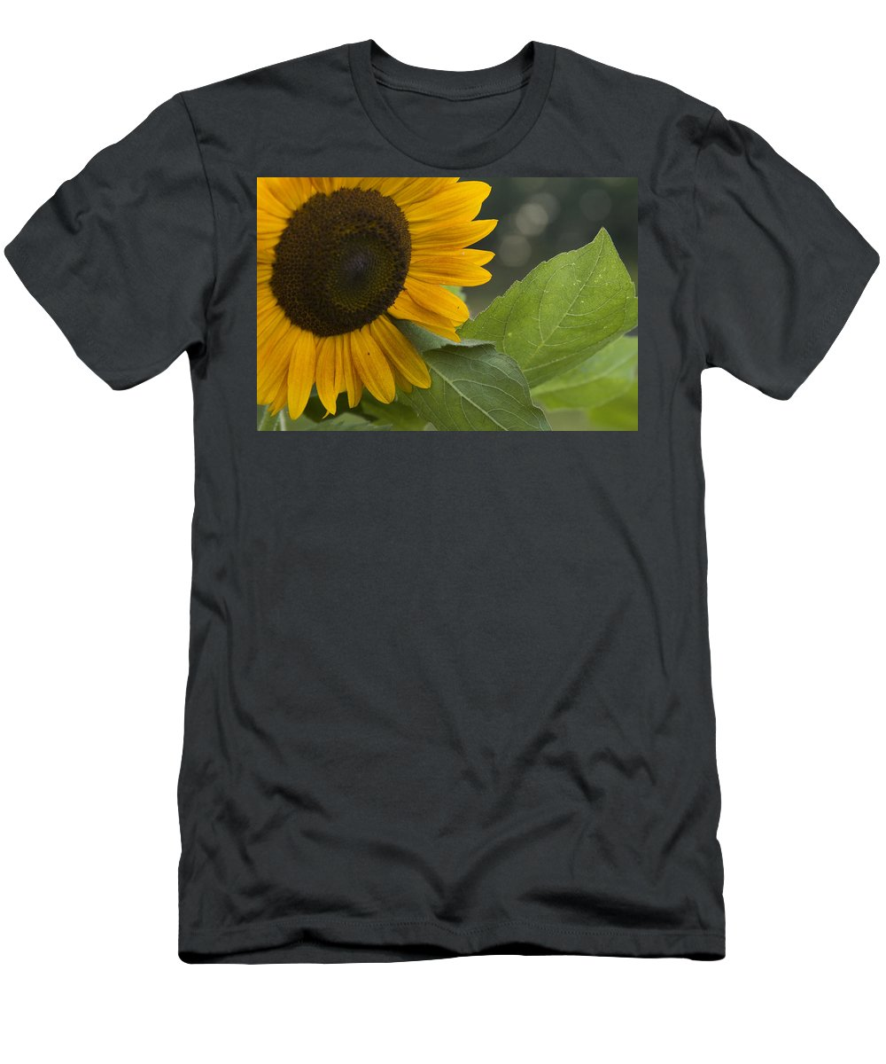 Flower Nature Farm Yellow Bright Sunflower Green Leaf Leaves Close Garden Organic Happy Men's T-Shirt (Athletic Fit) featuring the photograph Sunflower by Andrei Shliakhau