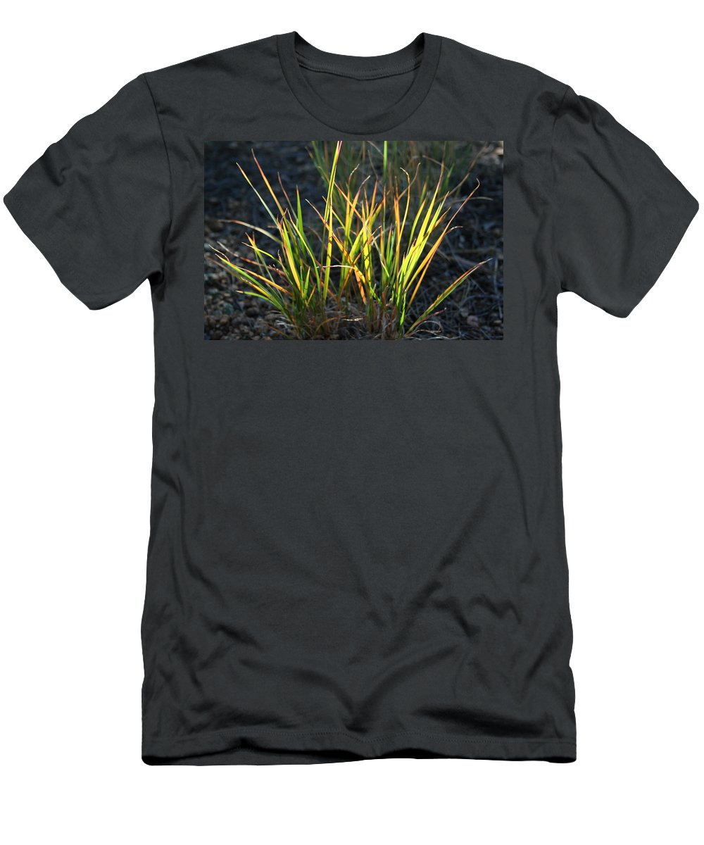 Grass Men's T-Shirt (Athletic Fit) featuring the photograph Sunlit Grass by Ric Bascobert