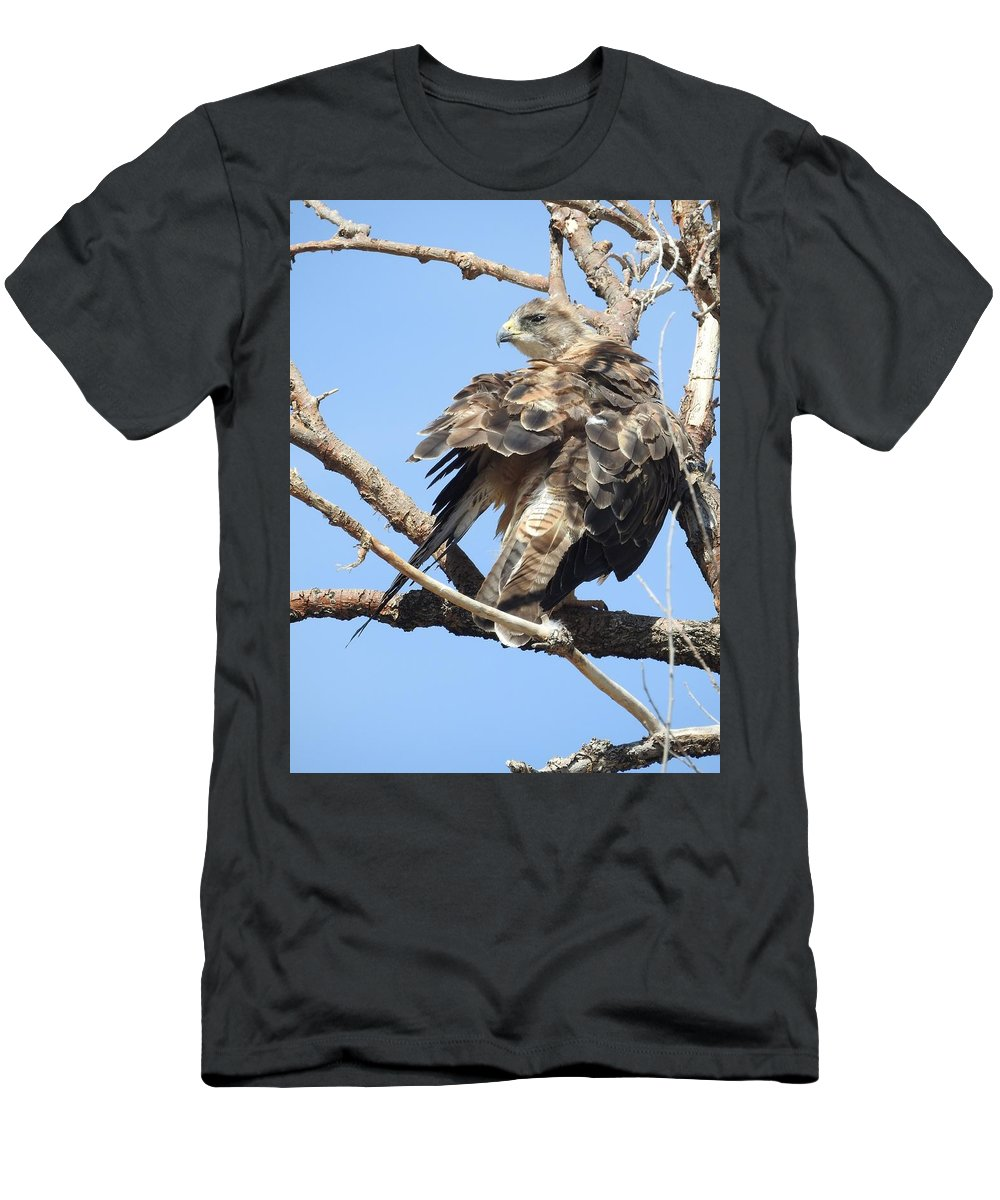 Swainson Men's T-Shirt (Athletic Fit) featuring the photograph Swainson Hawk by Nicole Belvill