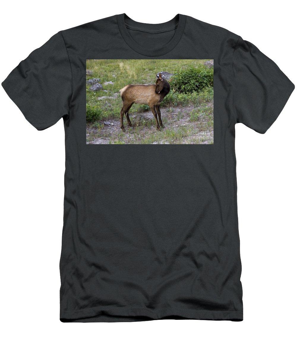 Animal Men's T-Shirt (Athletic Fit) featuring the photograph Sweet Elk Calf by Teresa Zieba