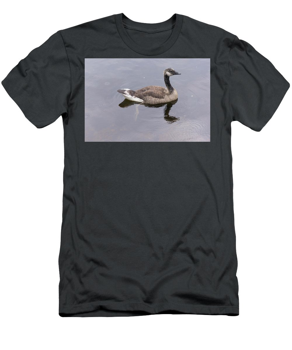 Canada Goose Men's T-Shirt (Athletic Fit) featuring the photograph Swimming Canada Goose by Adam Gladstone