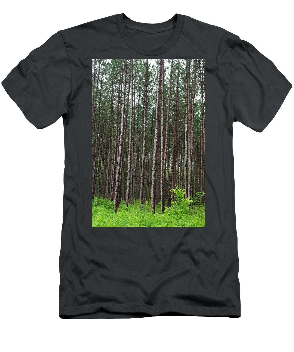 Pines Men's T-Shirt (Athletic Fit) featuring the photograph Tall Pines After The Rain by Alice Markham