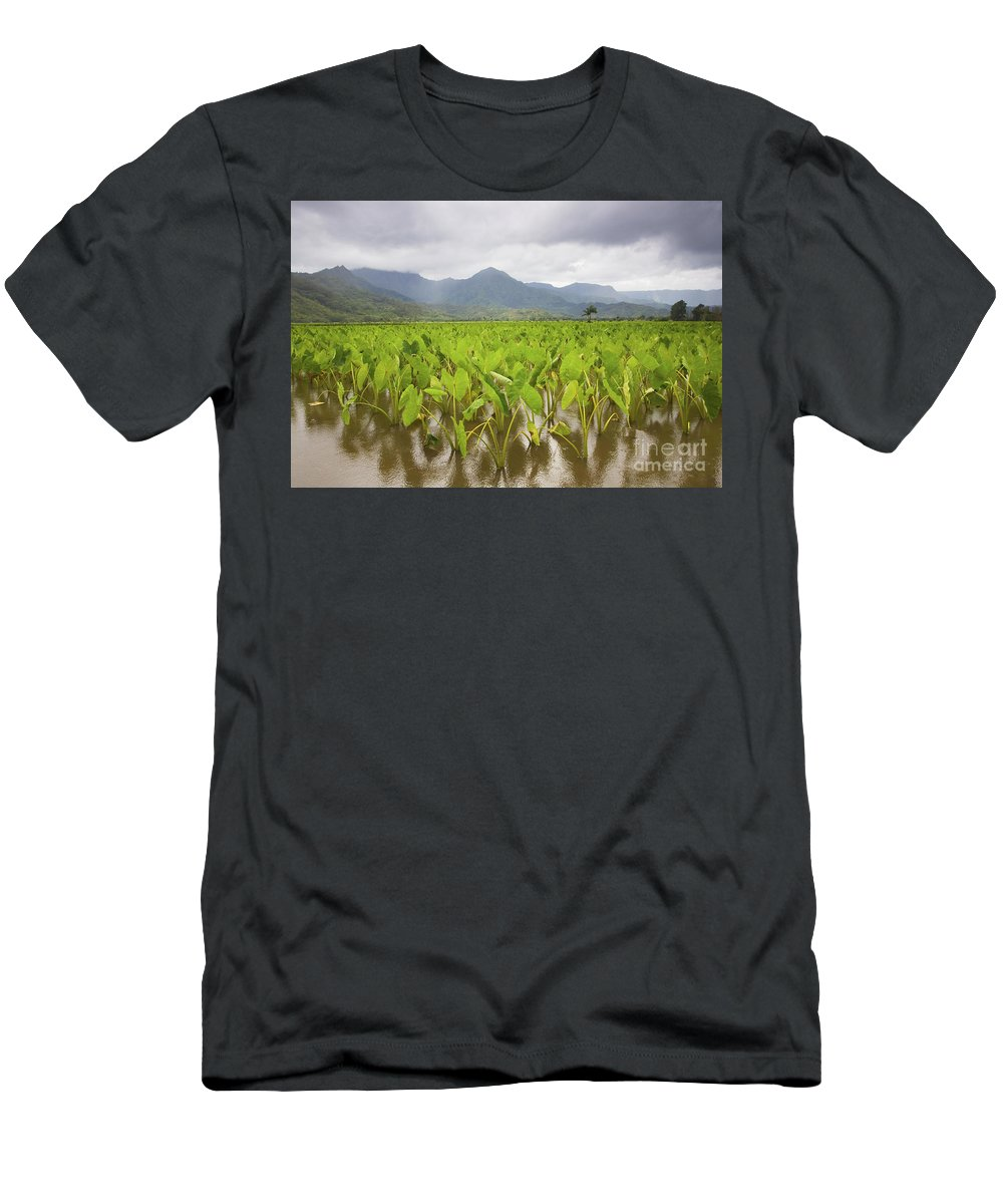 Afternoon Men's T-Shirt (Athletic Fit) featuring the photograph Taro Field by Ron Dahlquist - Printscapes
