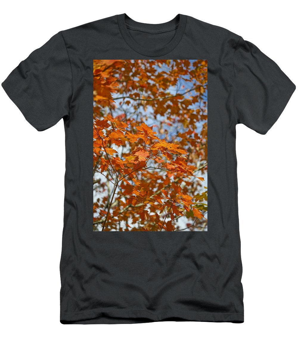 Fall Men's T-Shirt (Athletic Fit) featuring the photograph The Color Of Fall 1 by Teresa Mucha